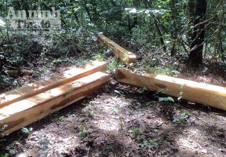 Bat nhom doi tuong khai thac go rung trai phep trong khu bao ton - Anh 3