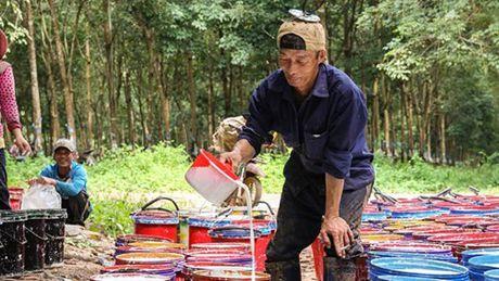 HAGL tuyen 3.000 lao dong lam tai Lao, Campuchia - Anh 1
