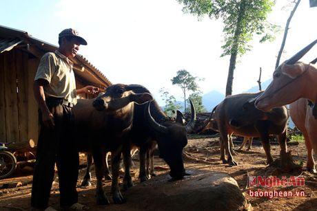 Cuu chien binh nguoi Thai lam giau tren dinh Phia Phong - Anh 2