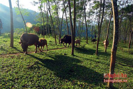 Cuu chien binh nguoi Thai lam giau tren dinh Phia Phong - Anh 3