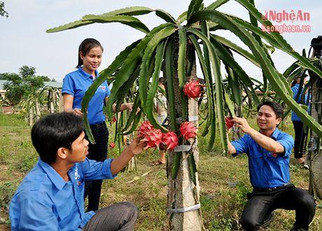 Hang chuc mo hinh trong thanh long ruot do hieu qua cao o Thanh Chuong - Anh 3