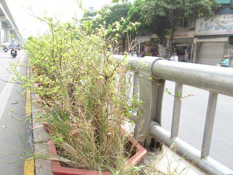 Ha Noi: Hang loat cay canh chet kho trong ham chui hang tram ty - Anh 11