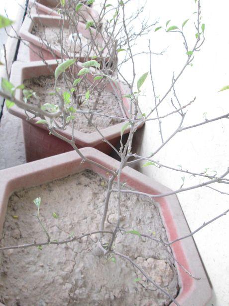 Ha Noi: Hang loat cay canh chet kho trong ham chui hang tram ty - Anh 4
