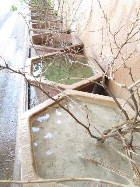 Ha Noi: Hang loat cay canh chet kho trong ham chui hang tram ty - Anh 7