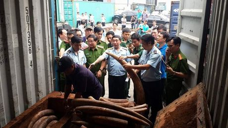 Pho Thu tuong chi dao xem xet khoi to vu van chuyen trai phep nga voi - Anh 1