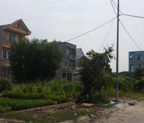 Phu Tho: Nguoi dan 'song do, chet do' tai Du an khu nha o phuong Nong Trang - Anh 1