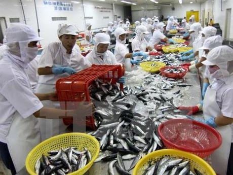 Truy xuat nguon goc thuy san de khong bi phat hang trieu USD - Anh 1