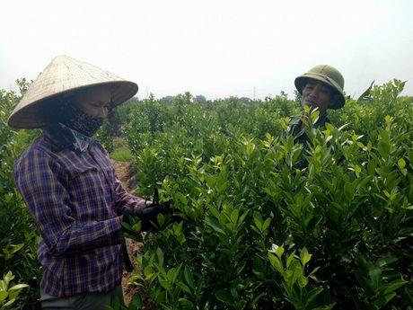 Buc Tuong Phat Ba Quan The Am da duoc tim thay o ve duong - Anh 1