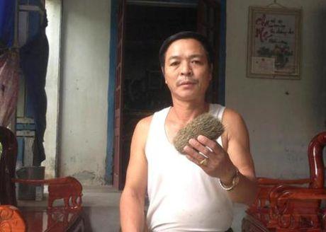 Su that cat lon tien ty o Viet Nam: Dem cho chau - Anh 1