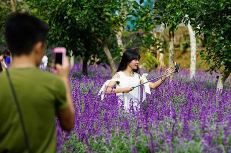 Gioi tre phat sot voi vuon hoa oai huong tren cao nguyen Lao Cai - Anh 3