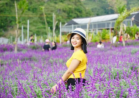 Gioi tre phat sot voi vuon hoa oai huong tren cao nguyen Lao Cai - Anh 5