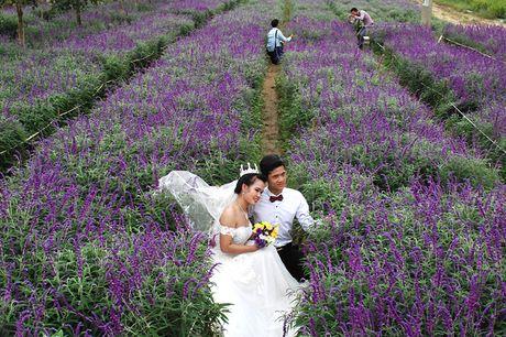 Gioi tre phat sot voi vuon hoa oai huong tren cao nguyen Lao Cai - Anh 6