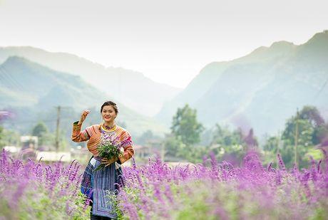 Gioi tre phat sot voi vuon hoa oai huong tren cao nguyen Lao Cai - Anh 9