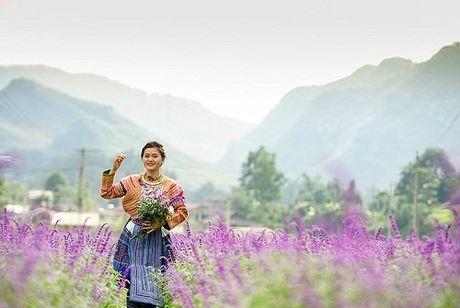 Me man voi canh dong hoa oai huong tim biec tai Lao Cai - Anh 4