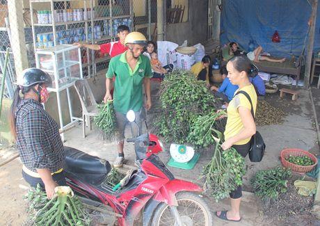 Lai o at tan thu cau non ban cho thuong lai Trung Quoc - Anh 3