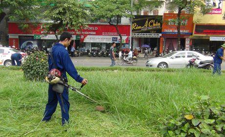 Ha Noi: Cong nhan chat vat cat co dai tren pho - Anh 4