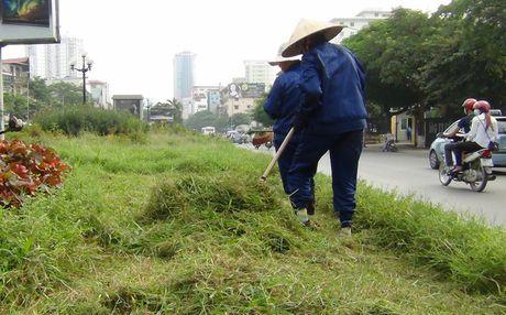 Ha Noi: Cong nhan chat vat cat co dai tren pho - Anh 7