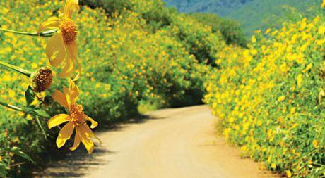 Chiem nguong cung duong hoa da quy dep nao long o Da Lat - Anh 1