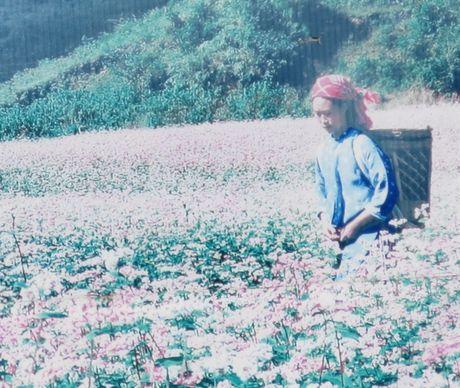 1.000ha hoa tam giac mach don cho du khach - Anh 1