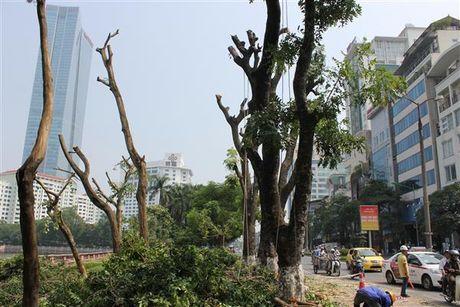 Ha Noi: Di chuyen 106 cay xanh tren duong Kim Ma - Anh 2