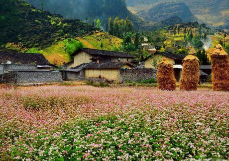 Song nhu nhung doa hoa Tam giac mach - Anh 1