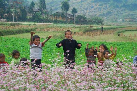 Song nhu nhung doa hoa Tam giac mach - Anh 5