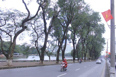Ha Noi: Hang cay co thu o Kim Ma chuan bi phai 'di chuyen' - Anh 2