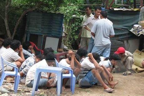 Quang Nam: Triet xoa soi ga an tien - Anh 1