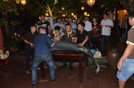 Ca tra Bien Ho 'khung' nhap ve nha hang Da Nang - Anh 2