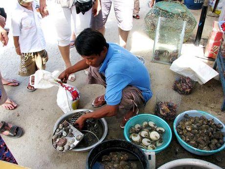 Ra Cu Lao Cham thuong thuc hai san tuoi song - Anh 2