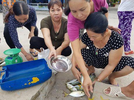 Ra Cu Lao Cham thuong thuc hai san tuoi song - Anh 3
