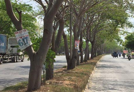 Quang cao goc cay, cot den va nhung he luy - Anh 1