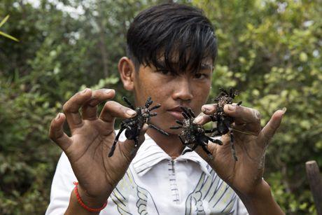 Tho san nhen khung lam dac san o Campuchia - Anh 5