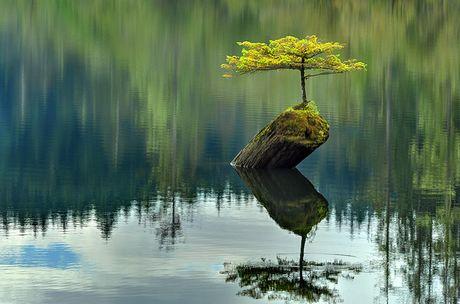 Nghe thuat tuyet dep cua nhung cay bonsai - Anh 12