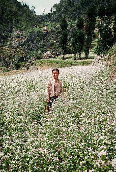 Ngam hoa tam giac mach dep mo mang giua nui rung Tay Bac - Anh 6