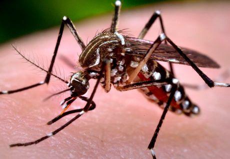 Phat hien ve muoi van mang virus Zika luu hanh o Viet Nam - Anh 1