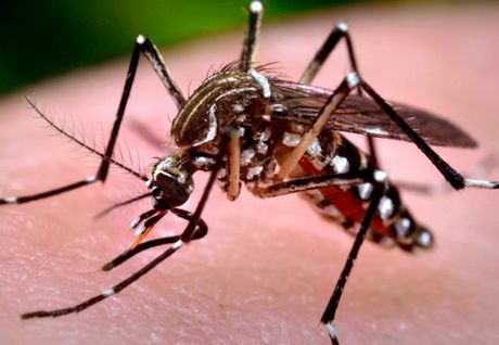 Ban tin 20H: Virus Zika hien da luu hanh trong muoi van tu nhien - Anh 1