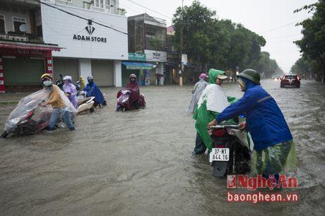 Mua lon, Thanh pho Vinh ngap sau ca met - Anh 2