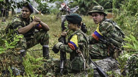 Colombia: FARC ung ho keo dai thoi han thoa thuan ngung ban - Anh 1