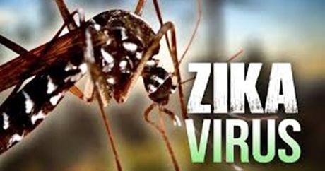 Phat hien nhieu ca the muoi van chua virus Zika - Anh 1