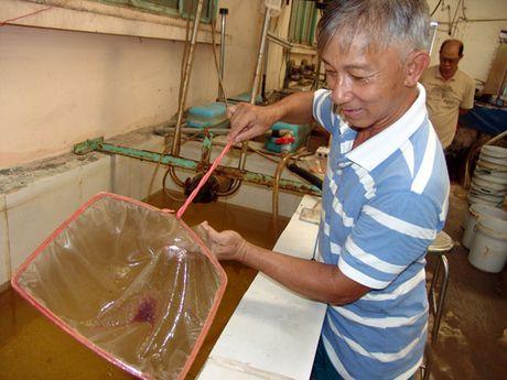 Thay vi o ruong, nong dan Sai thanh nuoi dai tra Artemia trong nha - Anh 1