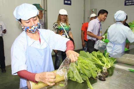 Tan muc cong nghe trong rau sach trong nha kinh lon nhat Viet Nam - Anh 8