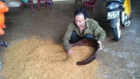 Mua lu tan pha mien Trung, Quang Binh gan nhu te liet - Anh 3