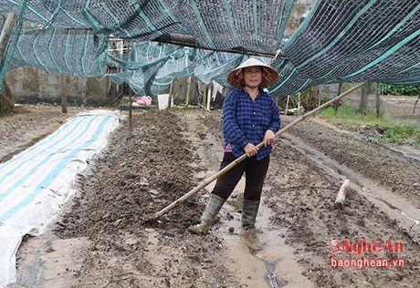 Nong dan trong rau Hung Dong thiet hai hang ty dong sau mua lon - Anh 7