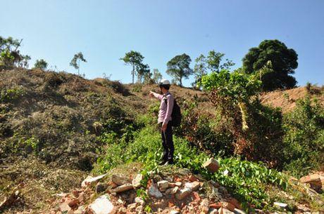 Quang Ngai: Nhieu di tich hoang phe - Anh 1