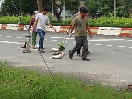 Cong bo nguyen nhan ca chet tai Vung Tau - Anh 1