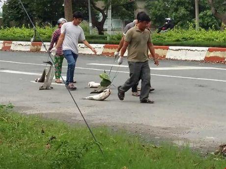 Cong bo nguyen nhan ca chet tai Vung Tau - Anh 2