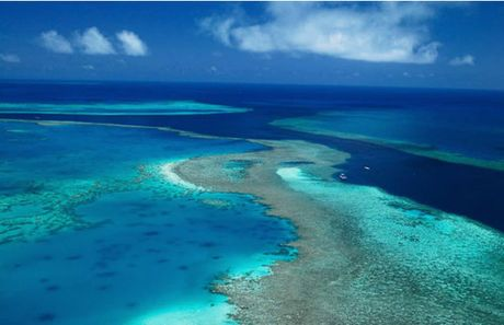 "Ran san ho Great Barrier Reef ""keu cuu"" - Anh 1"