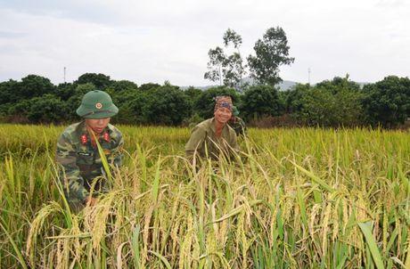 Bao so 7 cach Quang Ninh, Hai Phong 470km - Anh 3