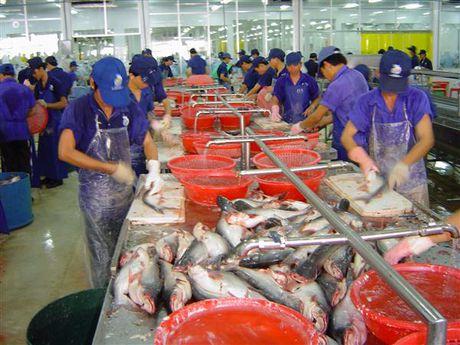 Tam ngung cap chung thu cho lo hang ca tra bi Hoa Ky canh bao - Anh 1